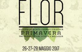 Flor Primavera 2017
