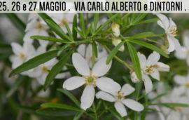 Flor primavera 2018 // 25, 26 e 27 maggio